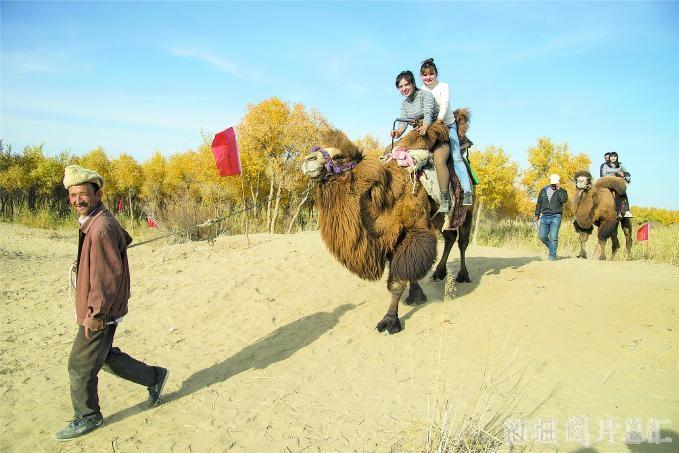 骑骆驼赏胡杨